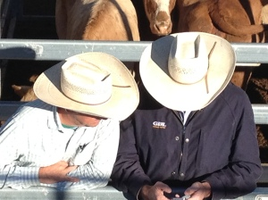 Dalby cowboys