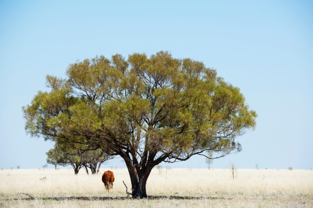 Tree_Outback-634