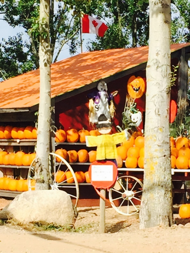 And it's Halloween soon, so let's not forget the pumpkin stands, scattered everywhere