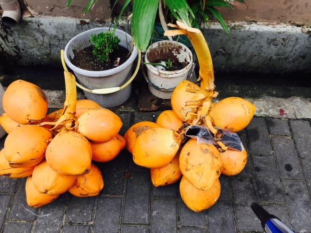 CoconutsTwo
