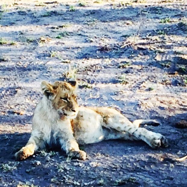 LionOne
