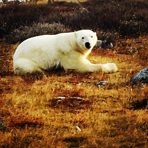 polarbearone